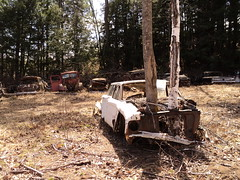Go  on without me... (sixty8panther) Tags: auto trees two white ford wagon mercury over junkyard salvage grown stationwagon blanchards fomoco backtonature