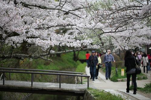 桜といっしょに・・・