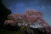 Old Cherry Blossom Galaxy (masahiro miyasaka) Tags: flowers blue light sky flower tree nature beautiful japan night canon stars landscape iso3200 star fisheye galaxy astrophotography cherryblossom 日本 wallpapers 花 lonelytree oneshot milkyway 夜 startrail earthandsky 14mm 星 samyang 銀河