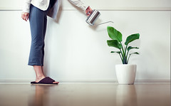 The Leading Cause of Household Plant Death is Overwatering (torode) Tags: life woman plant green water leaves japan tokyo leaf interior places indoor growth wateringcan slippers watering lowangle potplant skirting whitepot