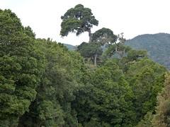 Bosque tropical de montaña (helicongus) Tags: costarica sangerardodedota robledaldequercuscopeyensis
