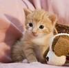 20110715_16389b (Fantasyfan.) Tags: pink baby cute animal topv111 cat furry topv333 kitten tabby fluffy horror kauhu fantasyfanin highqualityanimals siirretty