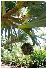 18052012-IMG_9229 (jacques.kayser) Tags: paris france vacances guadeloupe tokheim departementsdoutremer