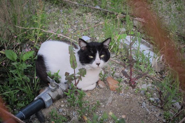 Today's Cat@2012-05-09