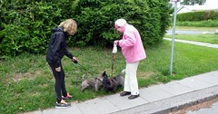 Tina and Otto meets the Cairn Terrier called Tina (os♥to) Tags: pentax optiowg2gps scandinavia zealand june2012 danmark sjælland woman tina otto dog terrier cairnterrier pet animal chien perro köpek cane hond pies デンマーク denmark os♥to osto europa europe inthepeoplealbum