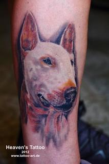 Bullterrier (healed) 9551
