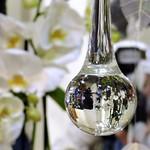 La llàgrima de l'orquídia