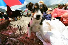 LLevame! (María Granados) Tags: dog cute puppy ecuador wideangle cachorro animales otavalo granangular tierno canon1022mm