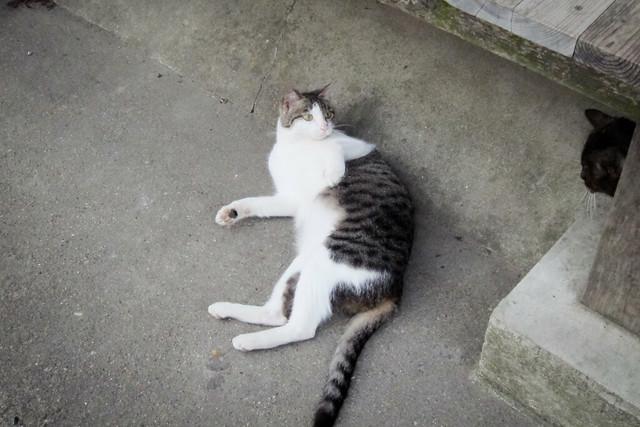 Today's Cat@2012-05-20