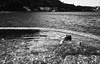 horizontal (gorbot.) Tags: sea summer blackandwhite bw me lumix swimmingpool sicily palermo m43 santaflavia takenbyroberta micro43 microfourthirds siverefex dmcgf1 panasoniclumixgf1 20mmlumixf17 kafarahotel