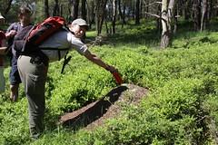 Mathiska laat ruiken hoe mierenzuur stinkt. (Rob van Hilten) Tags: vogels veluwe veluwezoom kamperen herten zandhagedis reen hazelworm slangenarend edelherten robsreality eindelozeveluwetocht natuurmonumtenten fotograafrobvanhilten