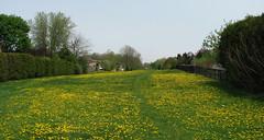 Open Fields. (MrDanMofo) Tags: ontario green nature field cycling biking dandelions brampton heartlake mrdanmofo