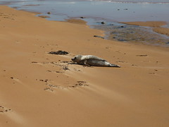Beach Walk - 03-JUN-2012 (lonegroover) Tags: beach walk stfergus stcombs fraserburgh peterhead rattray