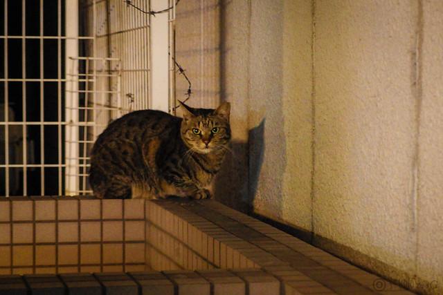 Today's Cat@2014-04-09