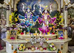 2016.05.30 (Darshan pictures ISKCON, Hungary) Tags: pink flowers blue color temple hungary religion budapest altar turban prabhupada darshan deities krisna iskcon gauranga gauranitai nityananda