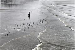 Hastings 804 (fishric) Tags: beach birds sand waves gulls panasonic hastings g3