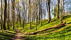 Spring walk (jorgen.martinsson) Tags: bverdalen alsters herrgrd skog trd vitsippa vitsippor track path stig vrmland vr spring sigma 1224mm