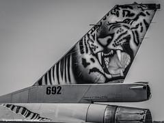 White tiger (NTM 2016) (Ignacio Ferre) Tags: airplane nikon fighter force aircraft military air tiger royal norwegian zaragoza f16 viper avin tigre nato otan tigermeet fightingfalcon lezg