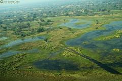15-09-20 Ruta Okavango Botswana (99) R01 (Nikobo3) Tags: travel parque paisajes naturaleza color canon ngc delta unesco viajes botswana okavango vuelo twop frica vidasalvaje g7x omot deltadelokavango flickrtravelaward canong7x nikobo josgarcacobo todosloscomentarios