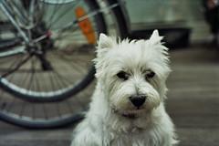 __6_0385 (samvanbunder) Tags: portrait dogs animals fuji superia 400 analogue helios unedited 442 xtra zenite