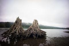 Edge of Rattlesnake Lake. (Matt Benton) Tags: digital rattlesnakelake voigtlandersuperwideheliar15mmf45 sonyalpha7