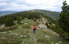 Sierra de Cebollera (Paulo Etxeberria) Tags: pins pinos pinetrees buey pinuak cameros cebollera castillodevinuesa