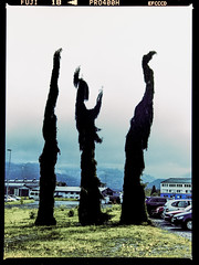 Mortal Kombat (PAMaire) Tags: color mamiya film fuji olympus ishootfilm arbres if fujifilm ifs mortalkombat 1250 1000s 80mm c41 filmphotography f19 m43 monthey fujipro400h pro400h m645 ahbenyaplus