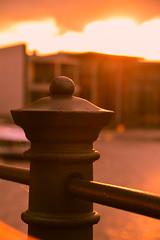 Fence detail (Maria Eklind) Tags: sunset sun sunlight detail berlin nature closeup fence germany de twilight europe dof outdoor depthoffield tyskland staket