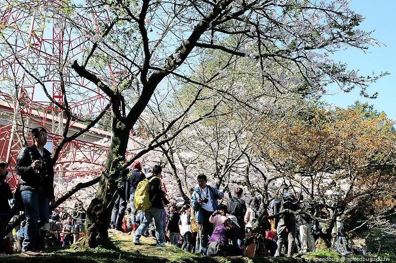 阿里山櫻花季50