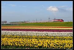 Thalys-4532_Hsghtn_29042012 (Dennis Koster) Tags: hyacinten bloemen parijs bollen pba tulpen thalys bollenveld hsl hogesnelheidslijn hogesnelheidstrein bloembollen hsa 4532 nshispeed weteringbrug 9388asdparijs