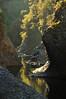 Boca de gorila (ifoto.cl) Tags: chile thok thokrates nabulen