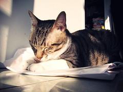 Morning (Nicholas  H) Tags: morning light pet sun white cute sunshine cat sunrise boot tabby pussy solarium rise    kamiu