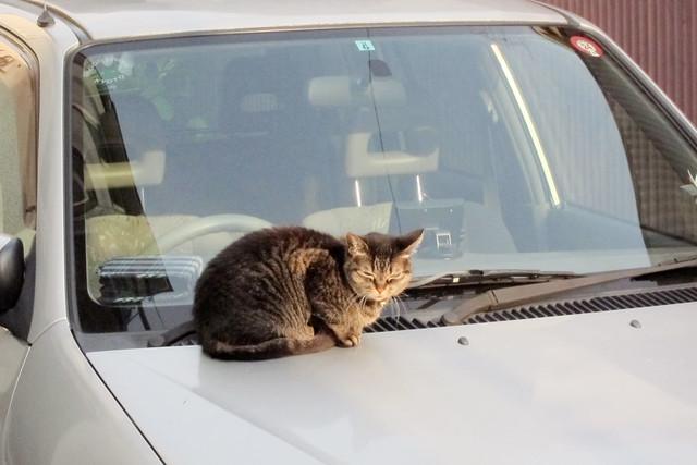 Today's Cat@2012-05-17
