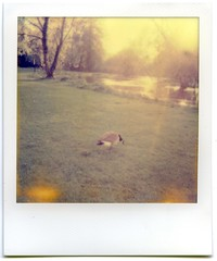 Impossible Goose (The Ewan) Tags: film polaroid goose oxford instant mesopotamia 636 impossibleproject
