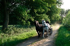 Horse and carriage (Thingus) Tags: sigma loon drenthe ballo foveon balloo dp2 kampsheide
