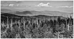 Mountain Range 1 (photosisee) Tags: park trees shadow sky bw mountains nature clouds forest canon dark landscape blackwhite great parks shades national fir haunting layers smoky dear spruce 1740 anseladams clingmansdome greatsmokymountainsnationalpark fraserfir greatsmokymountainnationalpark 60d extremedepth greatsmokymountainnationalp balsamwoollyaldegid