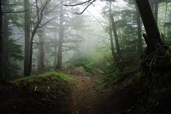 Mystery (WanderingAlice) Tags: mist tree station japan mystery forest fuji pentax 4th mount k5 18250