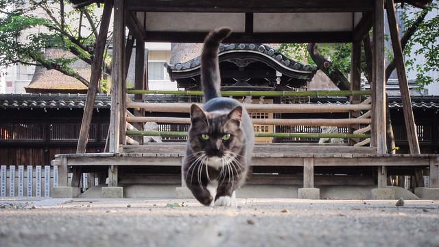 Today's Cat@2012-06-07