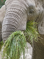 Elefant (P_A_S_M) Tags: pen zoo minolta olympus basel ep2 145 rokkor 75200