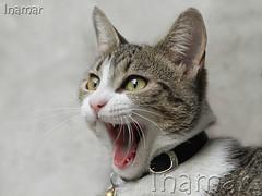 Kiwa (Marina-Inamar) Tags: gatos