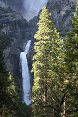 Lower Yosemite Fall (GMLSKIS) Tags: yosemite nationalpark california waterfall yosemitefalls