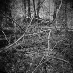 Less Discernible Houses #4 (LowerDarnley) Tags: trees house ma holga woods branches morningwalk stoneham