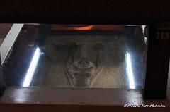 Goddess through a mirror (konde) Tags: ancient goddess granite sarcophagus nut newkingdom 19thdynasty merenptah 21stdynasty thirdintermediateperiod