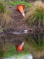 Coming Down to Drink (Steve Taylor (Photography)) Tags: road city newzealand christchurch orange brown white reflection green river traffic cone canterbury safety plastic nz southisland avon witcheshat