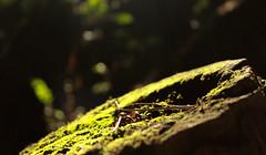 IMG_7507 (dafloct) Tags: chile parque naturaleza macro tree nature canon atardecer ecuador afternoon arboles zoom air free concepcion t5 urbano biobio region aire libre tarde octava hobbie