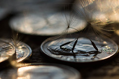 Dancing On A Dime (Captured Heart) Tags: money macro coins wishes dimes dime wish dandelionseeds macromondays smallerthanacoin