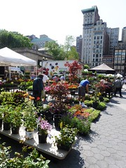 Farmer's Market Union Square NYC (MisterQque) Tags: nyc newyorkcity farmersmarket unionsquare