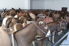 Lindos (Eleanna Kounoupa) Tags: tourism animals islands donkeys greece rodos  lindos  dodecaneseislands