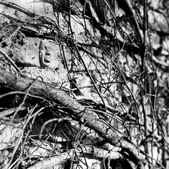 wriggle (Anton C.) Tags: blackandwhite bw white streetart berlin brick art 120 6x6 film tongue wall germany square blackwhite noir mask kodak roots ishootfilm bronica kodaktrix analogue nikkor rodinal mitte wriggle selfdeveloped semistand adox filmisnotdead zenzabronica analoguephotography zenzabronicas2a artinbw tendil standdevelopement adoxadonal adofix