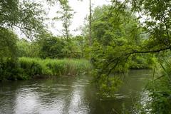 20160622-IMGP3855 (fleetingphotons) Tags: pentaxk1 sigma35mmf14art wasingestate fishing blank warrenbeat kennet
